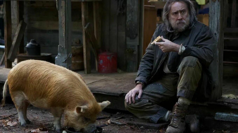Brody Pig
