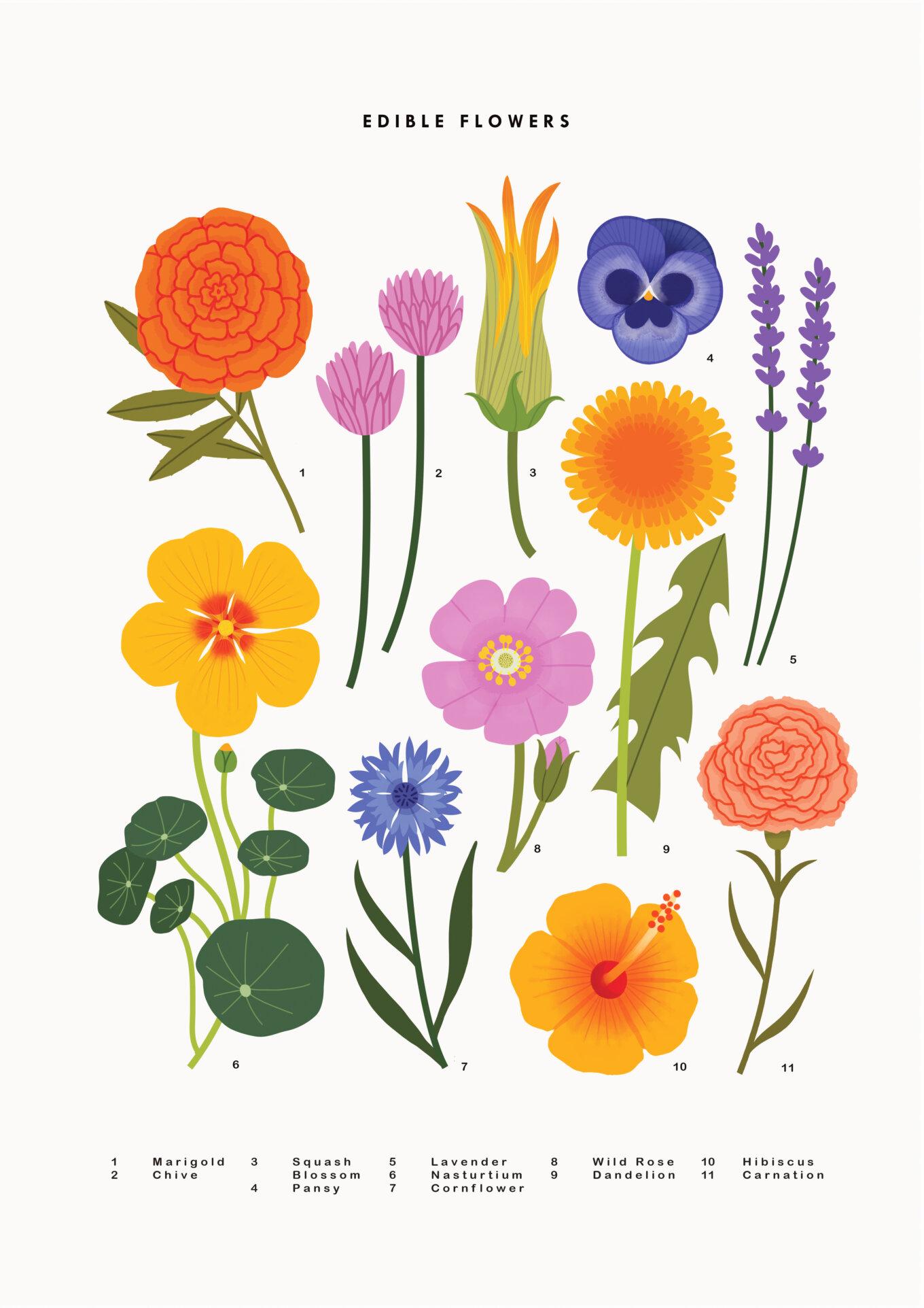 Edible Flowers Final copy