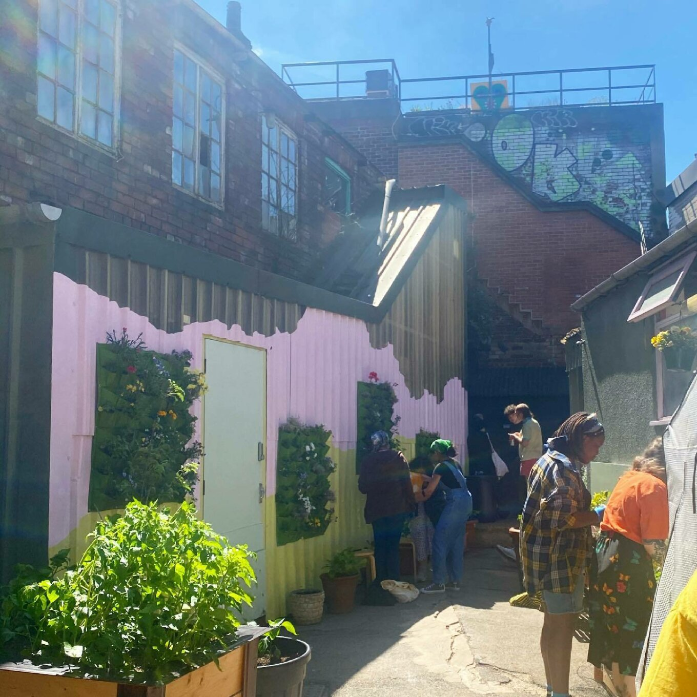 A sunny courtyard with a pink, khaki and chartreuse mural wall from which several planters are hung. To the left, greenery spills out of a wooden raised bed. To the right, an outbuilding is visible, windows open. Several people stand around chatting.