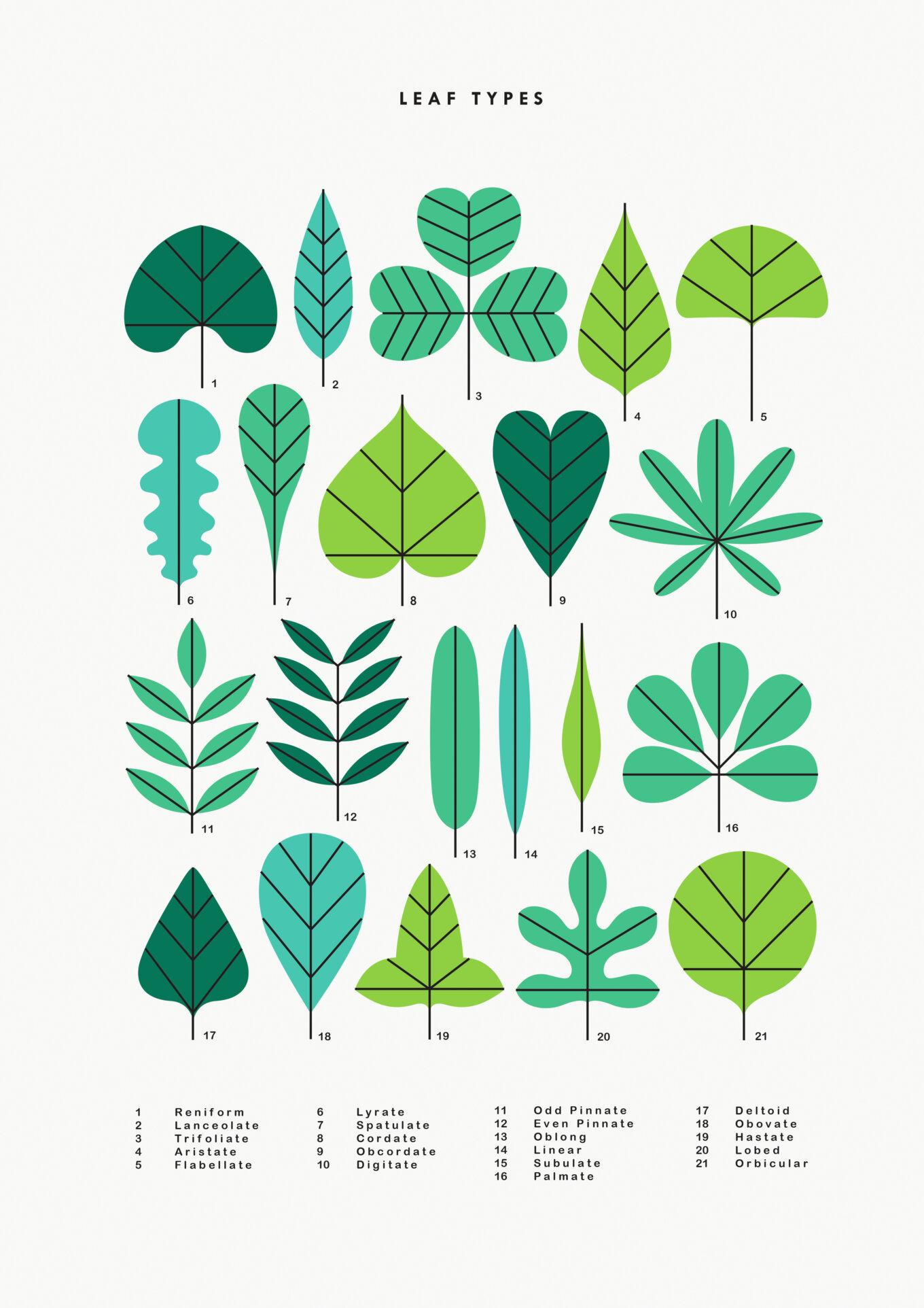 Leaftypes final copy