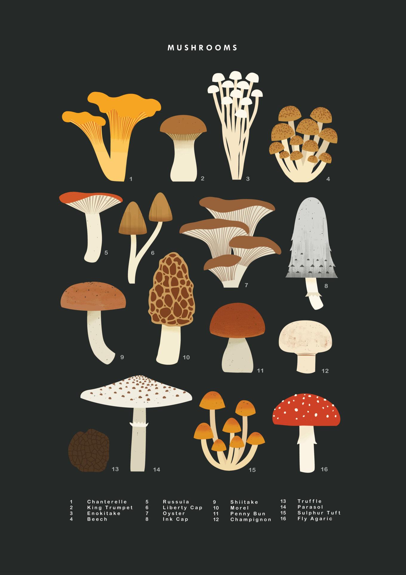 Mushrooms Final2 copy