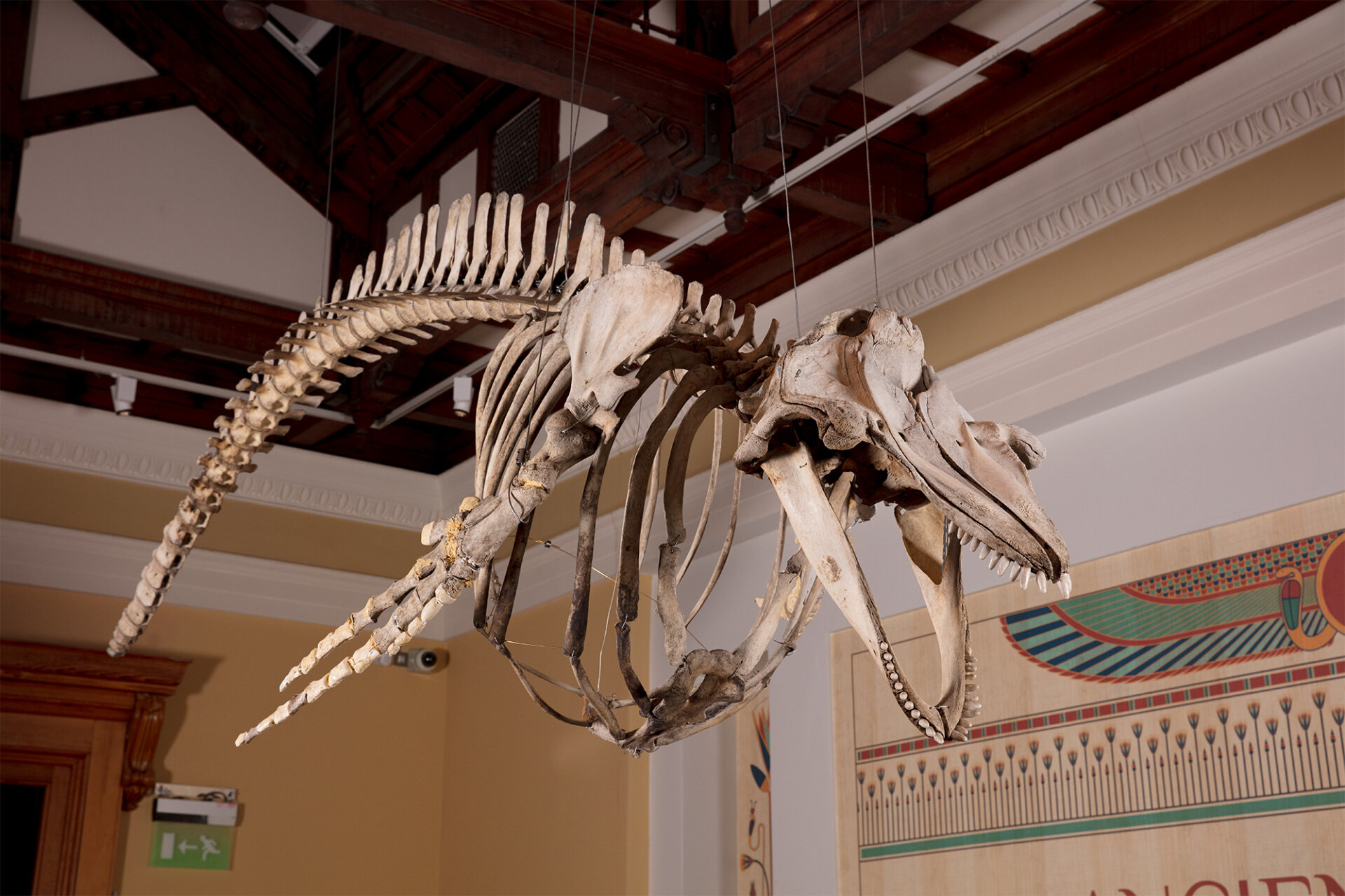 Museum whale Dave Clay